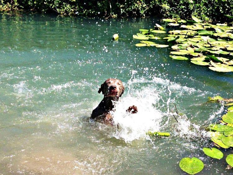 Quality Time Enjoying Life My Dog Swiming