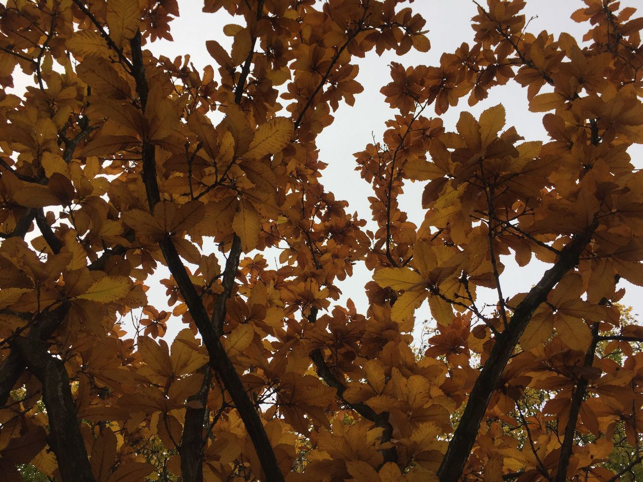 tree, growth, branch, nature, low angle view, leaf, beauty in nature, day, outdoors, freshness, autumn, no people, fragility, flower, close-up, sky