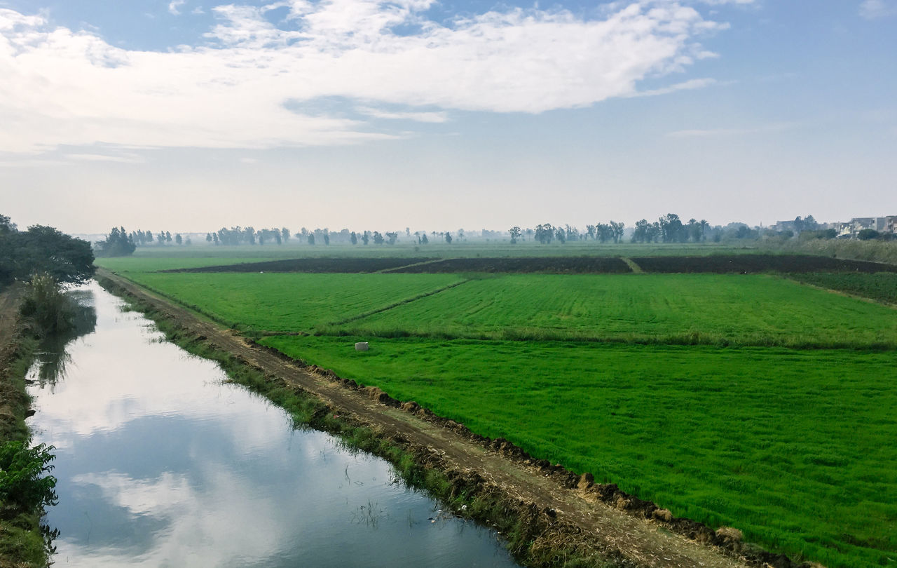 Agricultural Agriculture Beauty In Nature Canal Egypt Egyptian Field Fields Landscape Landscapes Nature Nature No People Outdoors Palm Tree Rural Scene Scenics Sky And Clouds Sunny Sunny Day Tree Village Village View Villages Water