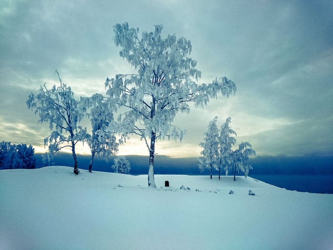 The Great Outdoors With Adobe Winter Snow ❄ Tree And Sky Trees Norway Lightroom Mobile