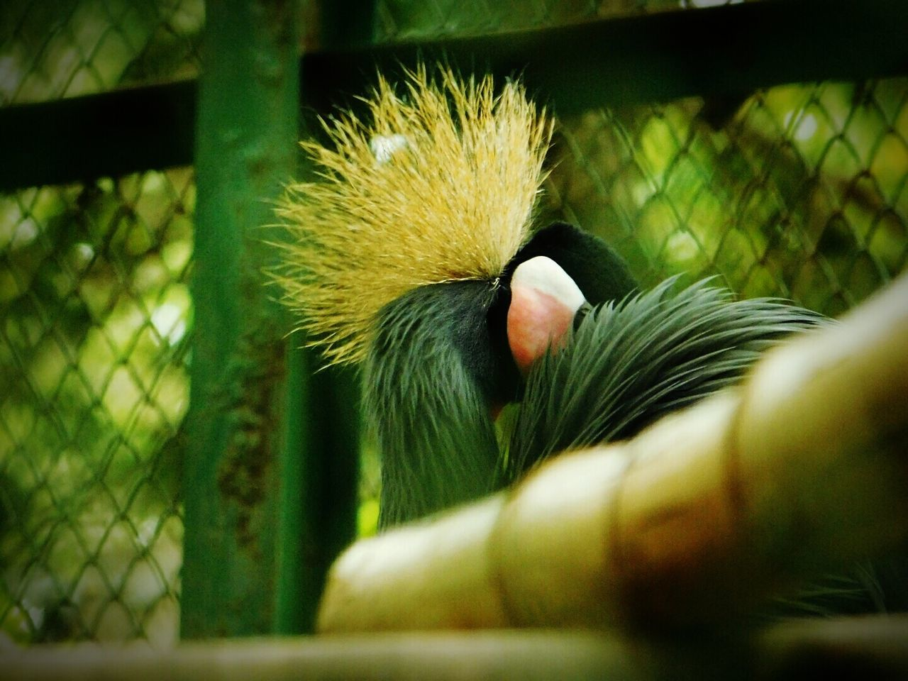 Bird Cage Trapped Nature Alone Looking For Freedom Sadness😢 Feeling Sad Wildlife Photography