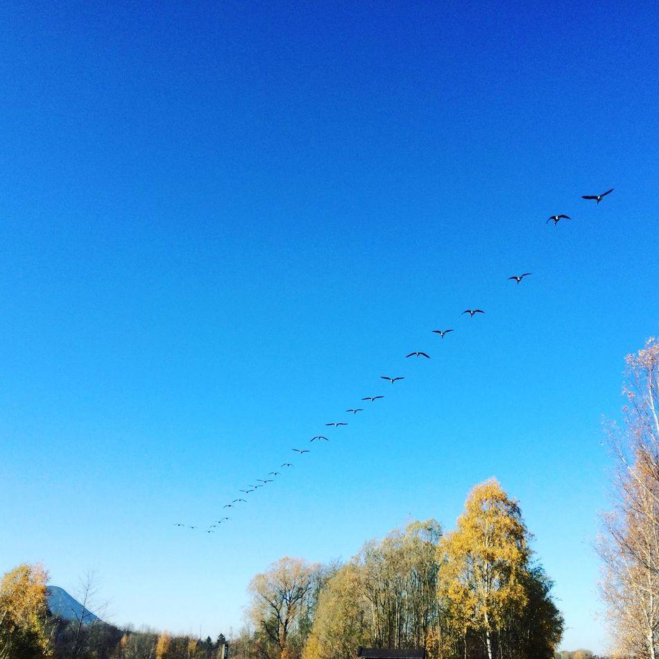 Taking Photos Birds Sun Blue Sky