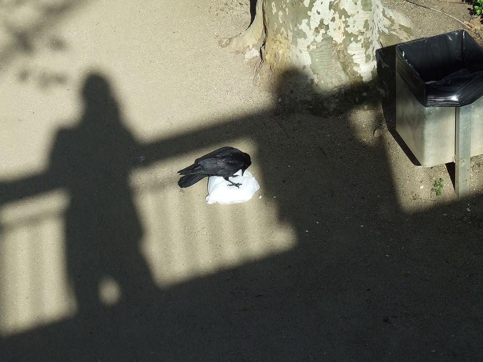 Hunger Day Focus On Shadow Mülltüte Papierkorb Rabe Schatten Schattenbild Sunshine