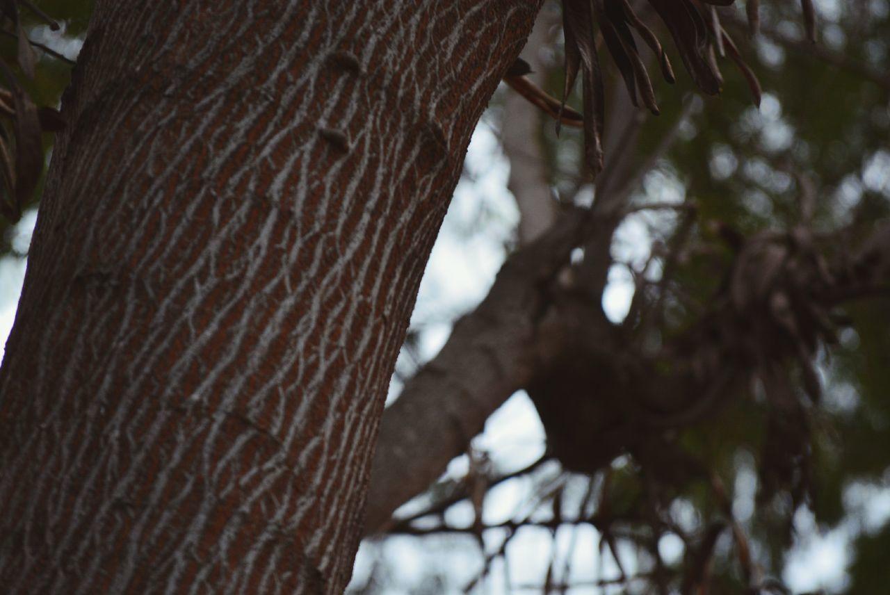 Nikon D5200.... Taking out trees Palmtree Worldwide Photowalk 2015 Takeout:) Nature Photography Naturelovers Likeforlike Likeforlike #likemyphoto #qlikemyphotos #like4like #likemypic #likeback #ilikeback #10likes #50likes #100likes #20likes #likere Like4like