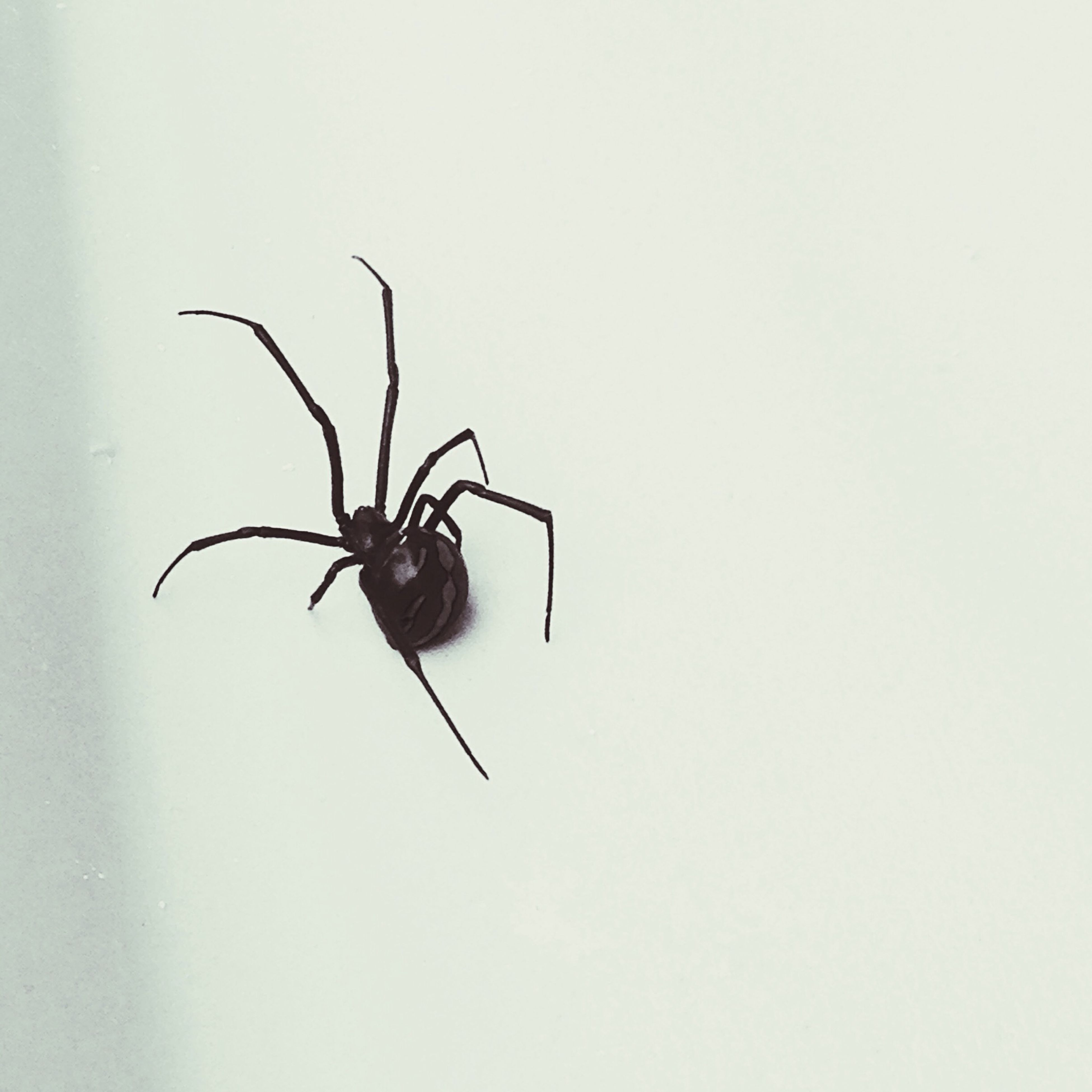 animal themes, insect, one animal, animals in the wild, wildlife, copy space, wall - building feature, spider, studio shot, white background, close-up, indoors, nature, no people, wall, stem, day, leaf, full length