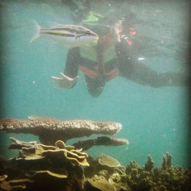 Snorkling, Pulau Tidung