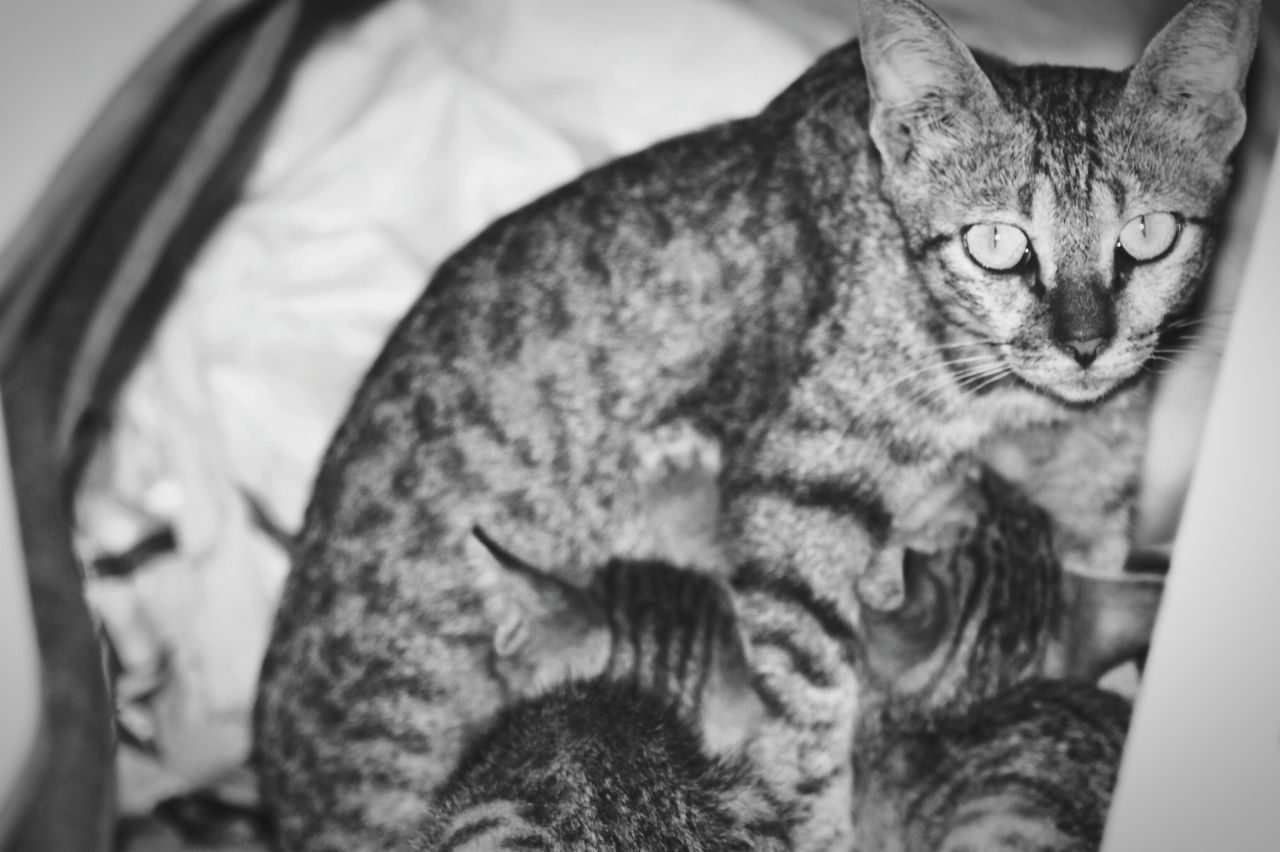 Here Belongs To Me Sowmiya, Cats, Kitten Feed First Eyeem Photo, outdoor, cats, black amd white, small cats, eyes sharp, feeding cats, mother nature, cats, likes, liked.