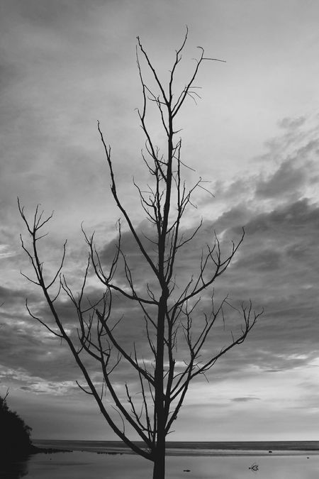 """""""Left nothing"""" Typhoon B&w Photography Check This Out Eyeem Philippines Polarr Canon Philippines Tree Ilocos Sur"""