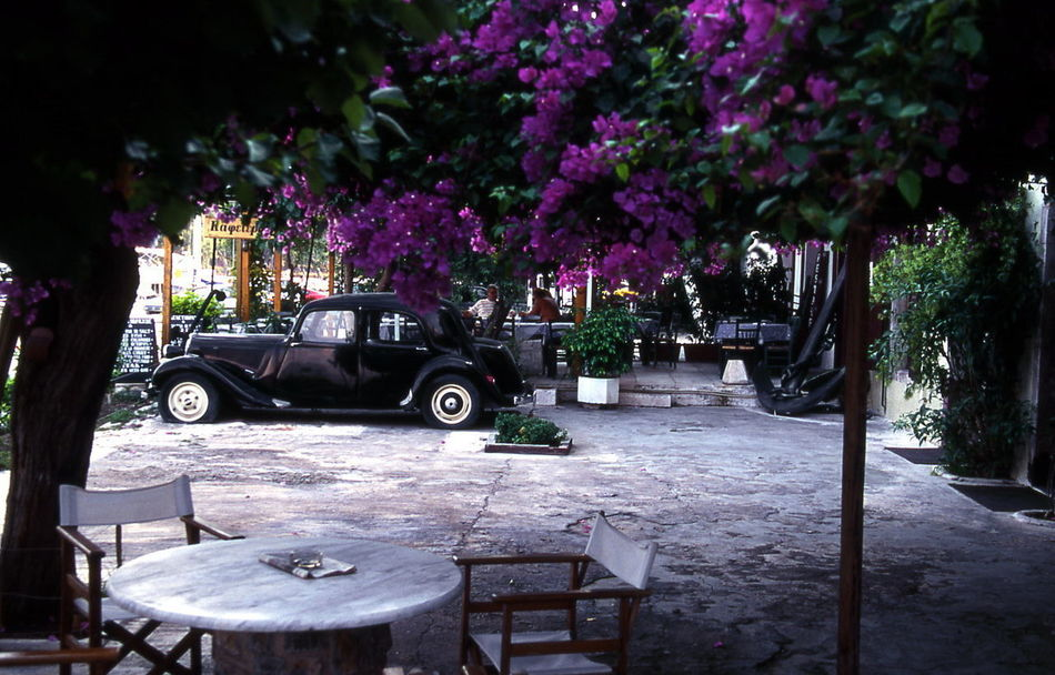 still1 Beauty In Nature Car City Day Flower Freshness Growth Land Vehicle Nature No People Old Citroen Outdoors Rest In Peace Rip Still Life Still Life With Car Table