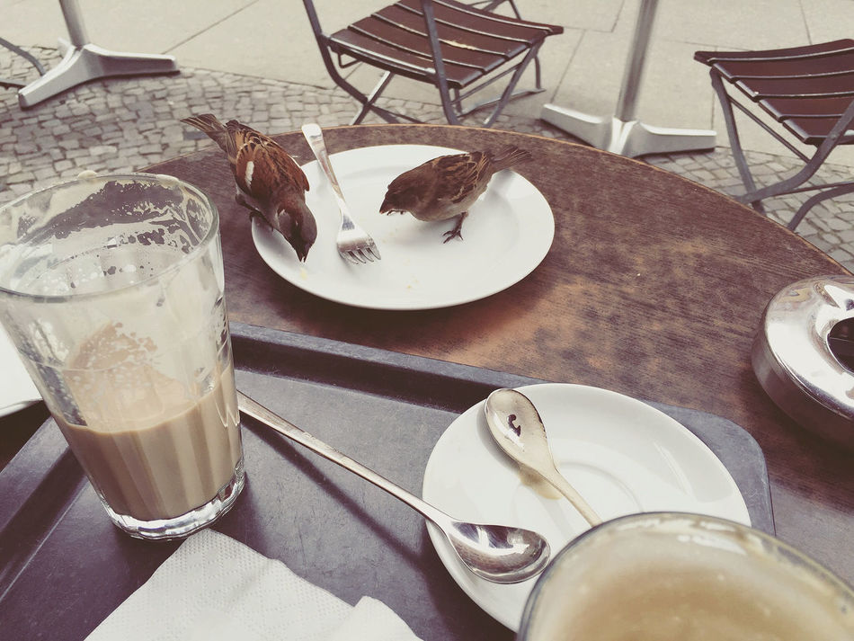 Beautiful stock photos of café, Animal Themes, Animals In The Wild, Bird, Chair