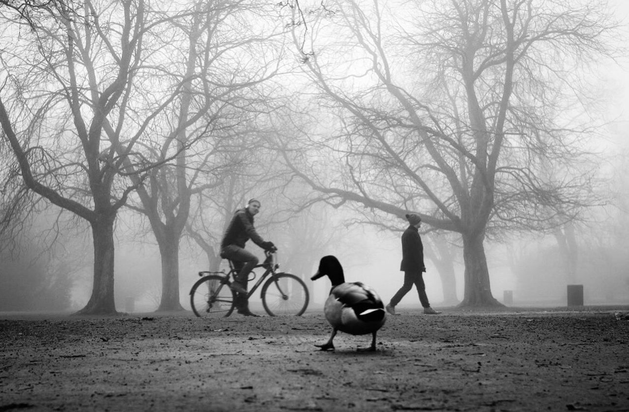 Bicycle Outdoors Fog Duck Black And White Bw_collection Monochrome Street Photography Low Angle View