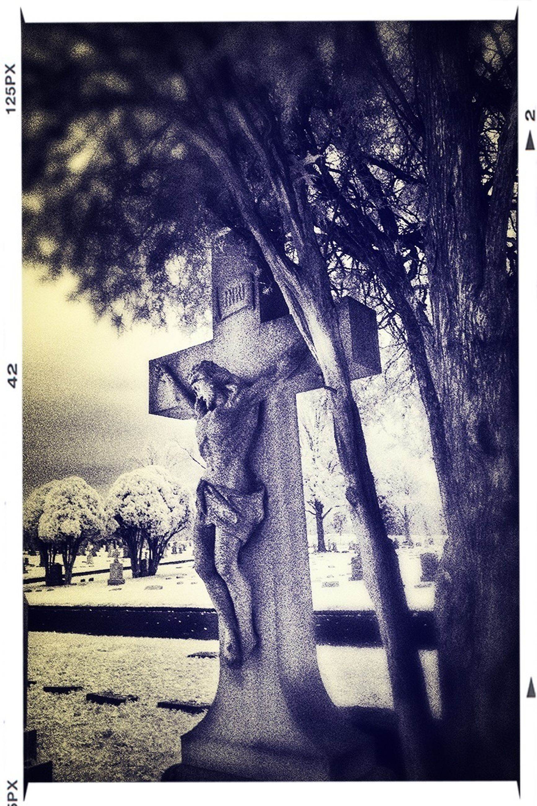 transfer print, auto post production filter, tree, architecture, building exterior, built structure, human representation, bare tree, sculpture, statue, art and craft, art, creativity, day, tree trunk, branch, outdoors, growth, sunlight