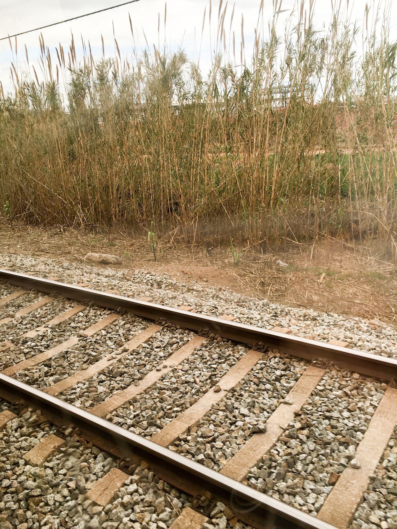 Train tracks Tracks Track Train Transportation Nature Traveling Train Tracks