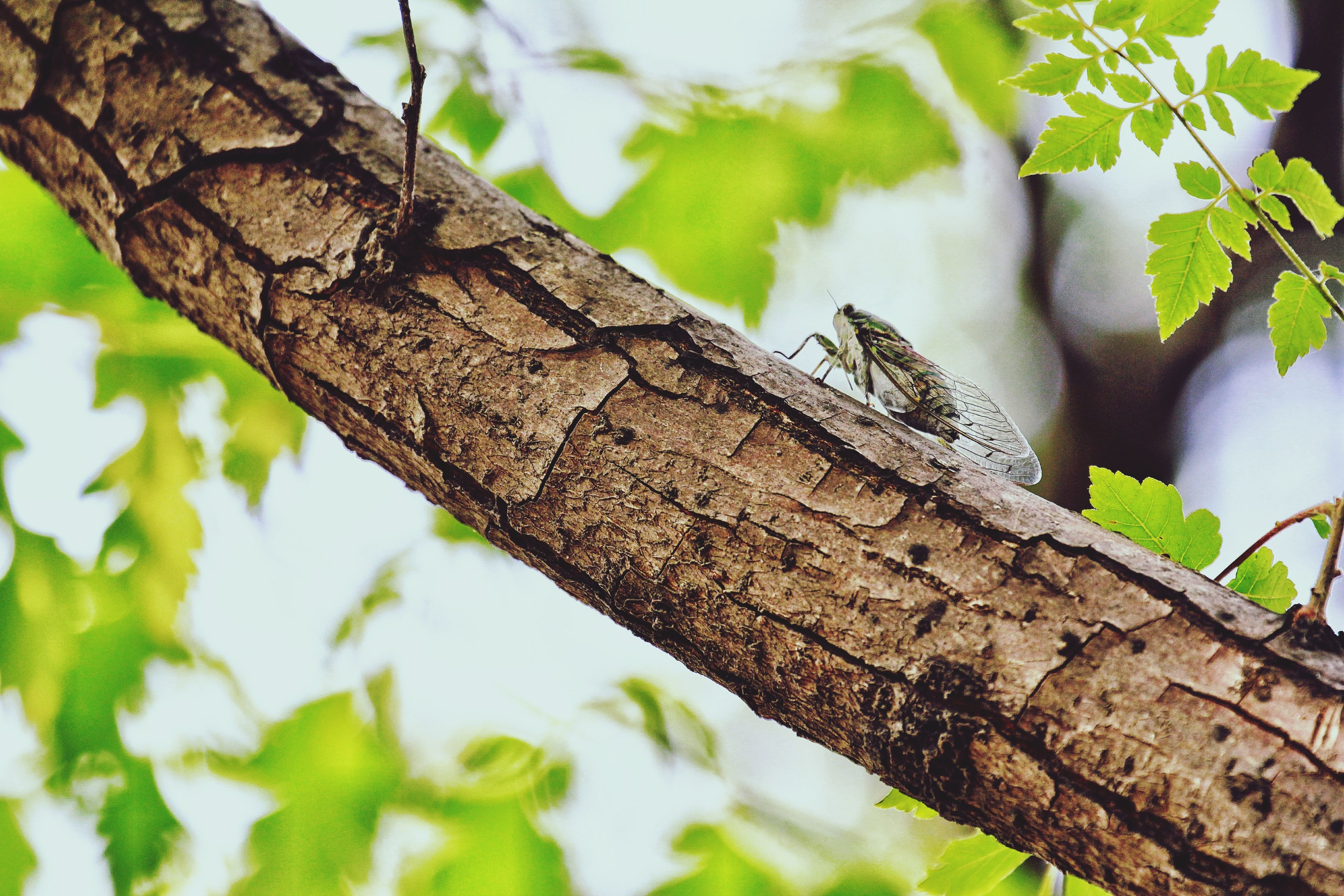 one animal, animal themes, tree, animals in the wild, tree trunk, animal wildlife, no people, focus on foreground, day, branch, reptile, outdoors, nature, insect, close-up, leaf, perching