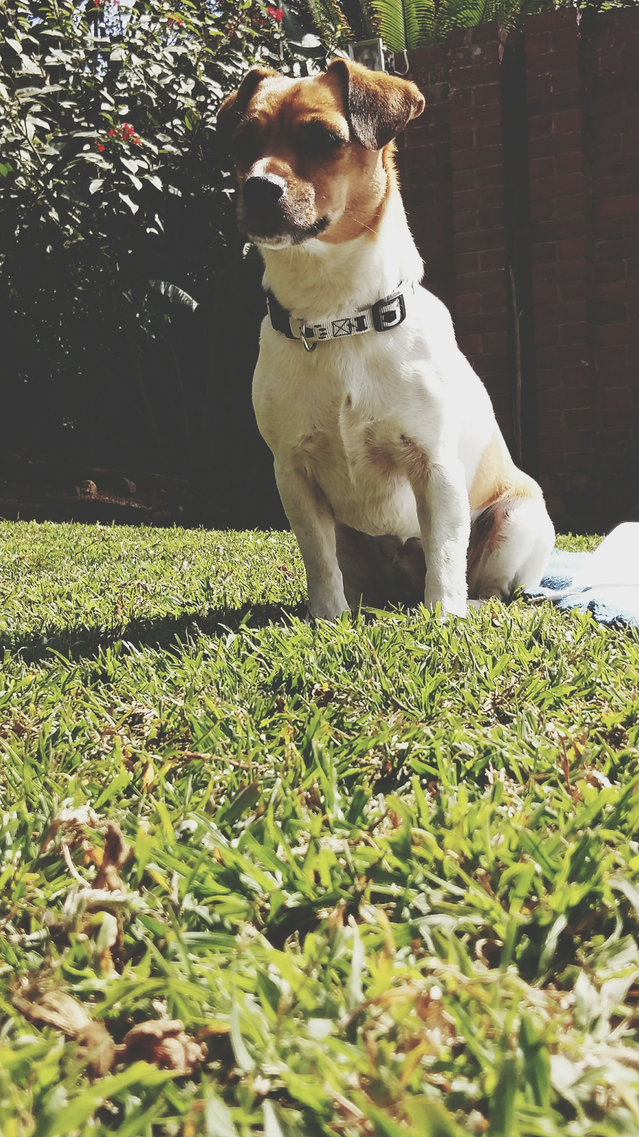 dog, pets, mammal, domestic animals, plant, one animal, sitting, animal themes, full length, growth, grass, standing, one person, front or back yard, looking at camera, relaxation, portrait, day, green color, flower