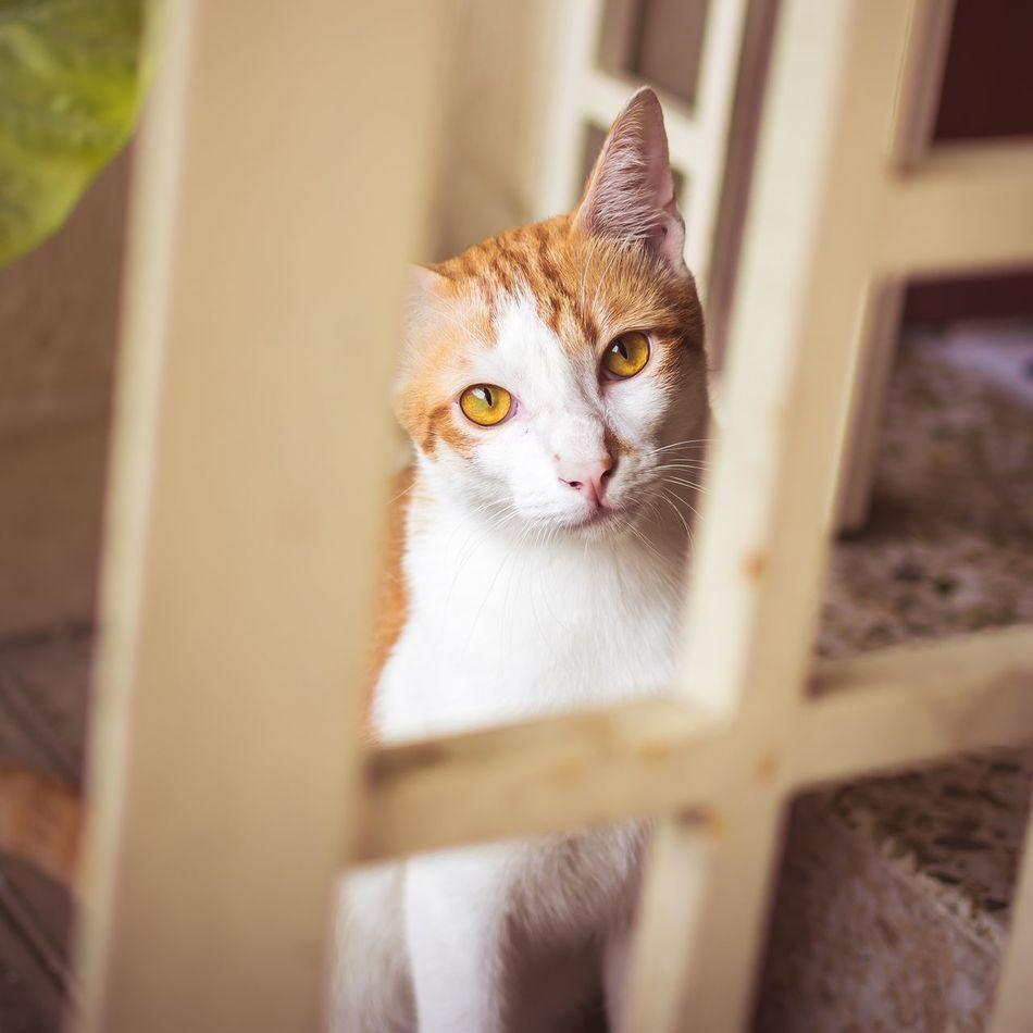Beautiful stock photos of cat, Animal Eye, Animal Themes, Cat, Day