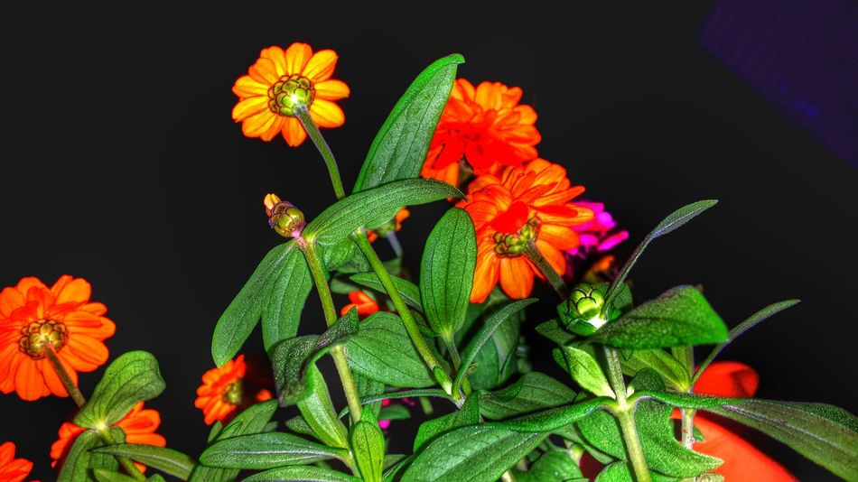 Potted Plants Against The Night Sky From Below Looking Up Flowers Green Leaves Night Photography Beauty Of The Night 43 Golden Moments Showcase July Colour Of Life