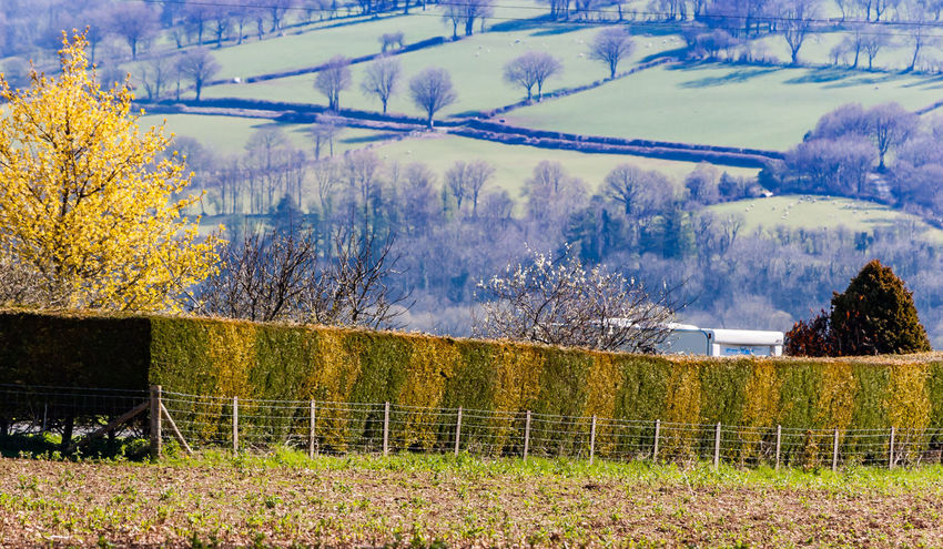 Farmland Fields Green Hedge Landscape Landscape_photography Spring Springtime Wales Yellow