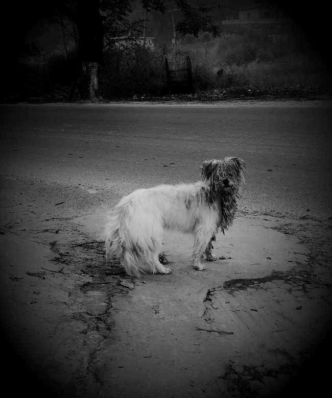 摄影 宠物狗