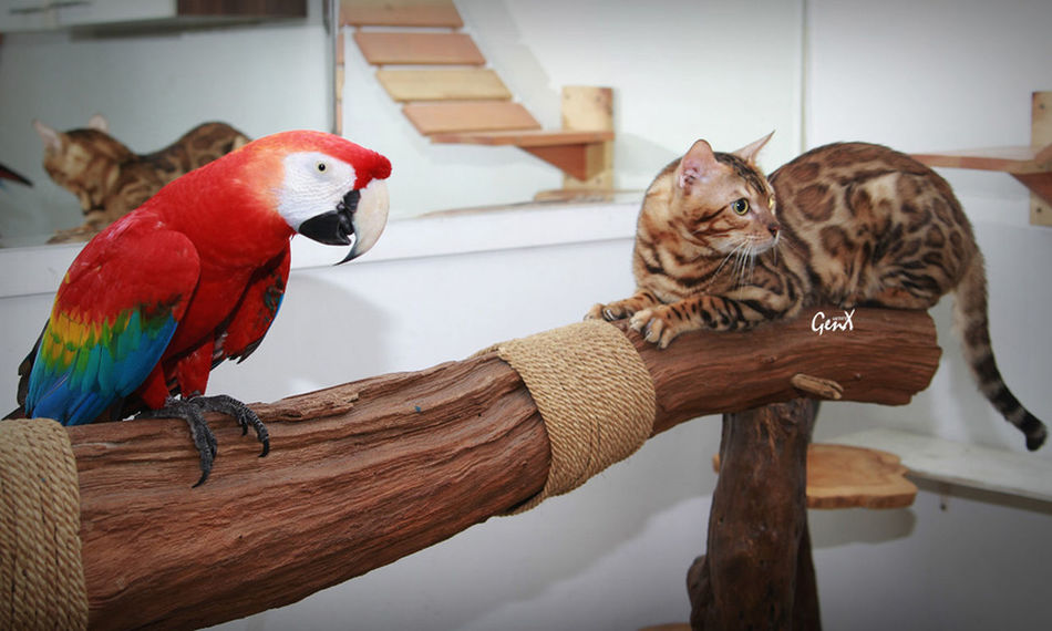 Relaxing Check This Out Taking Photos Hanging Out Animals Cats Pets Meow