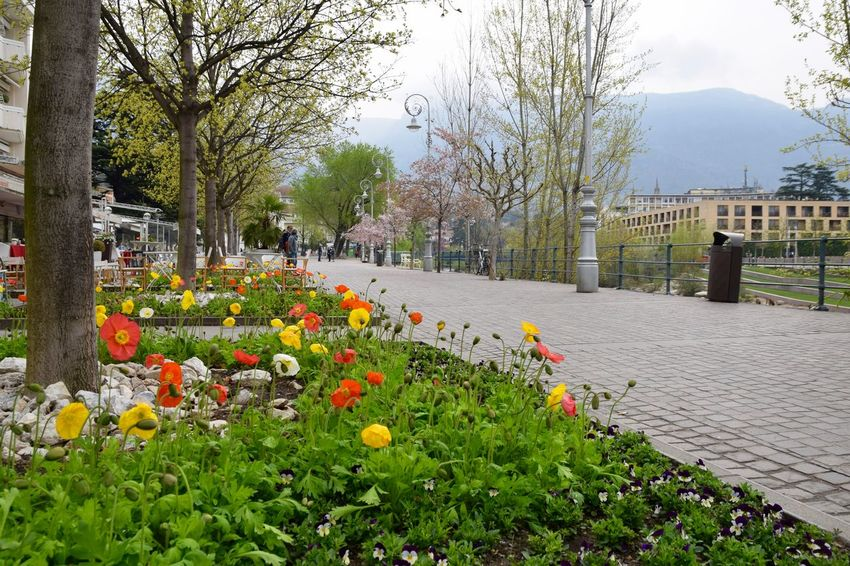 Alto Adige Artdeco City Citylife Flower Flower Beds Flowers,Plants & Garden Holiday Italia Italy Macro Merano Mountains Mountains And Sky Orange Color South Tyrol Spring Spring Flowers Südtirol Tourism Traveling Urban Spring Fever Walking Around