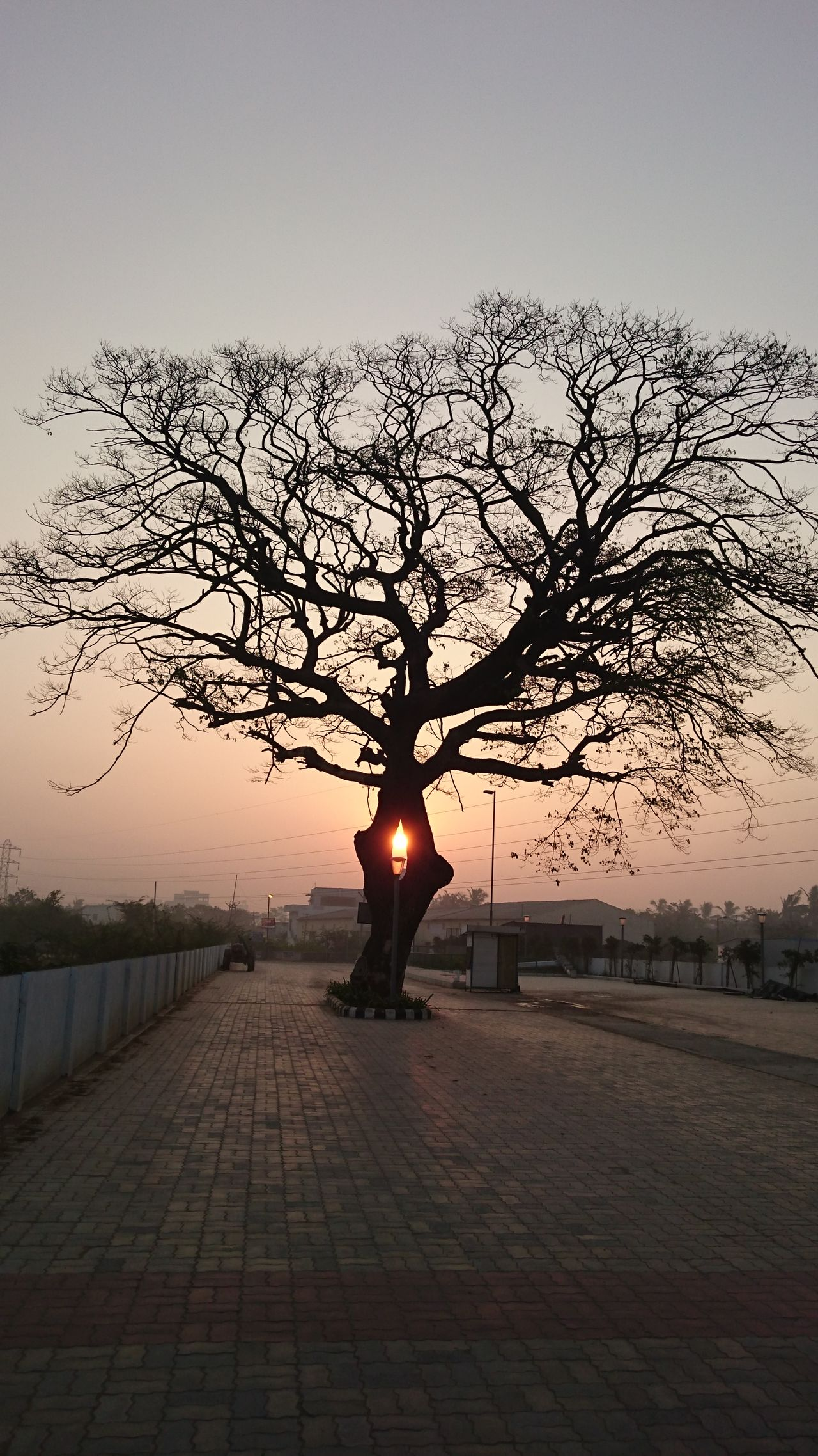 Bare Tree Day Nature No People Outdoors Sky Sunset The City Light