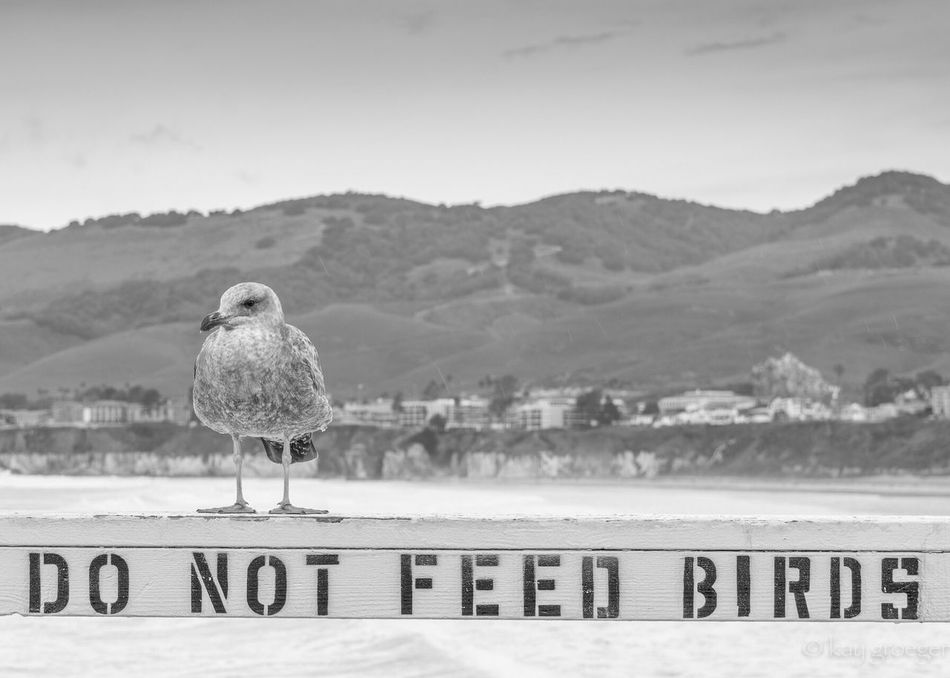 Do not feed birds Bird Nature Animal Themes Outdoors Animal Wildlife travel, California USAtrip Travel, Holidays Roadtrip water,