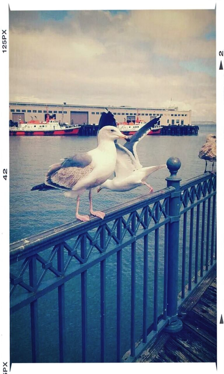 transfer print, auto post production filter, animal themes, bird, animals in the wild, seagull, railing, sea, wildlife, outdoors, one animal, day, sky, water, sea bird, perching, no people, horizon over water, nature