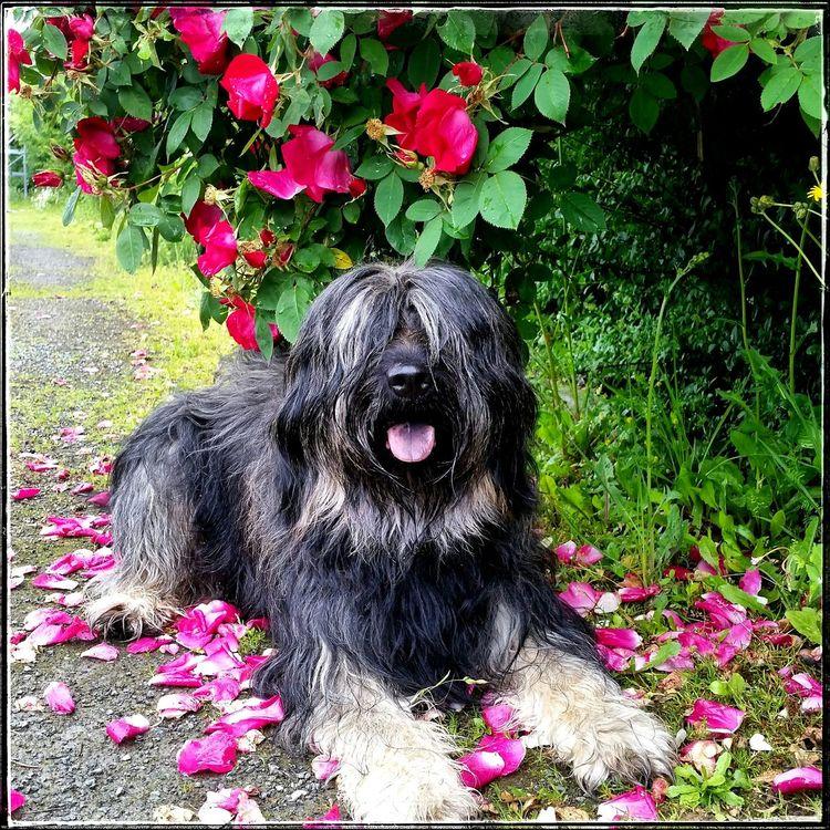 it's Summer Bentjesgosaugustin Gos D'atura Dog Walking I Love My Dog Landscape Nature Beauty #flower #spring #happiness Ilovemydog Mydog