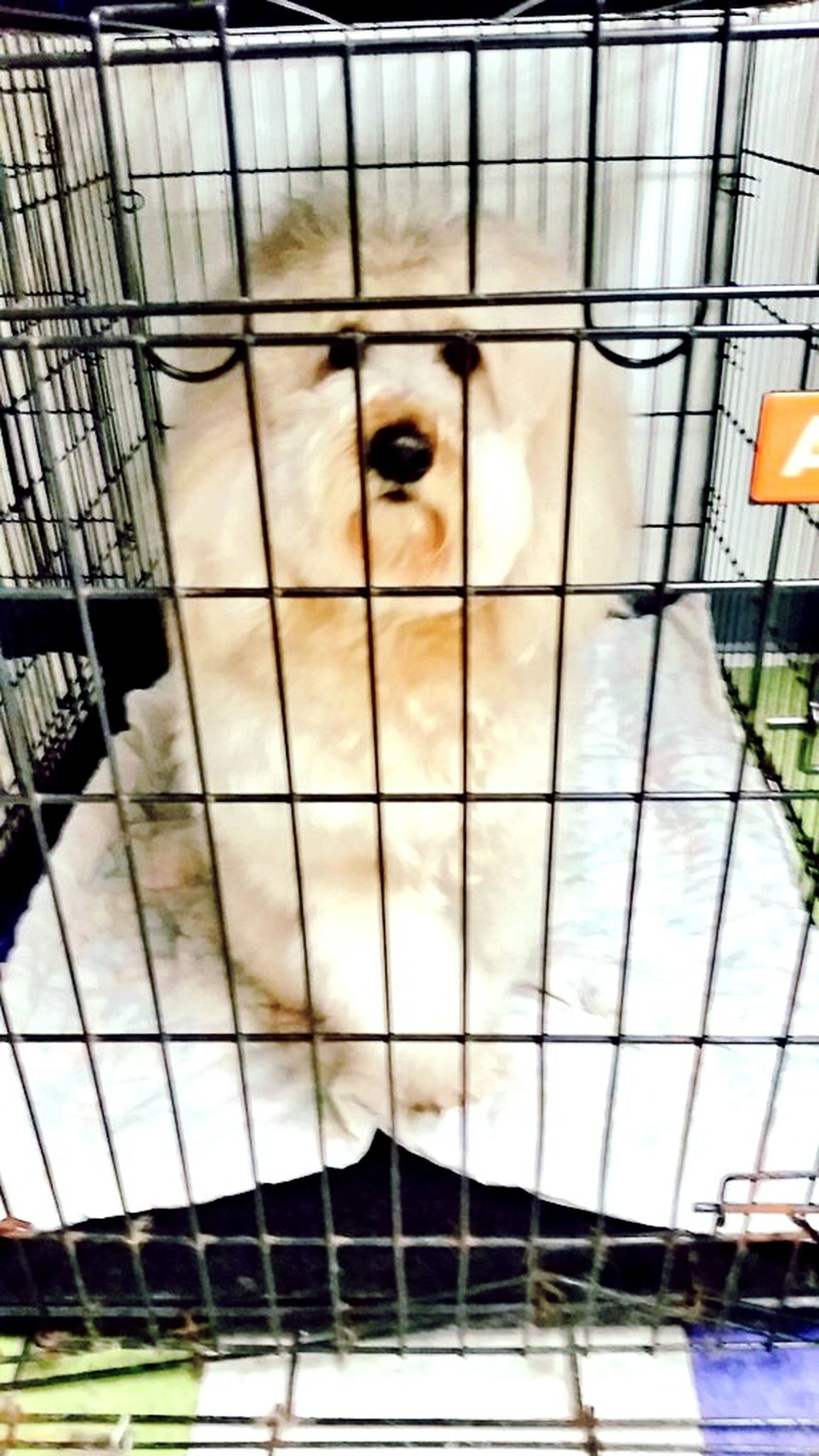 This guy was a hoot! 🐶😍😊 GroomerLife Groomer Grooming Dogs Love