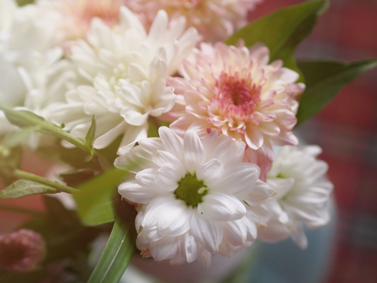 Flower Flower Head Blossom White Color Fragility Close-up Petal Plant Beauty In Nature No People Nature Springtime Freshness Peony  Day Indoors  EyeEm Selects Outdoors Beauty In Nature Nature Freshness Plant