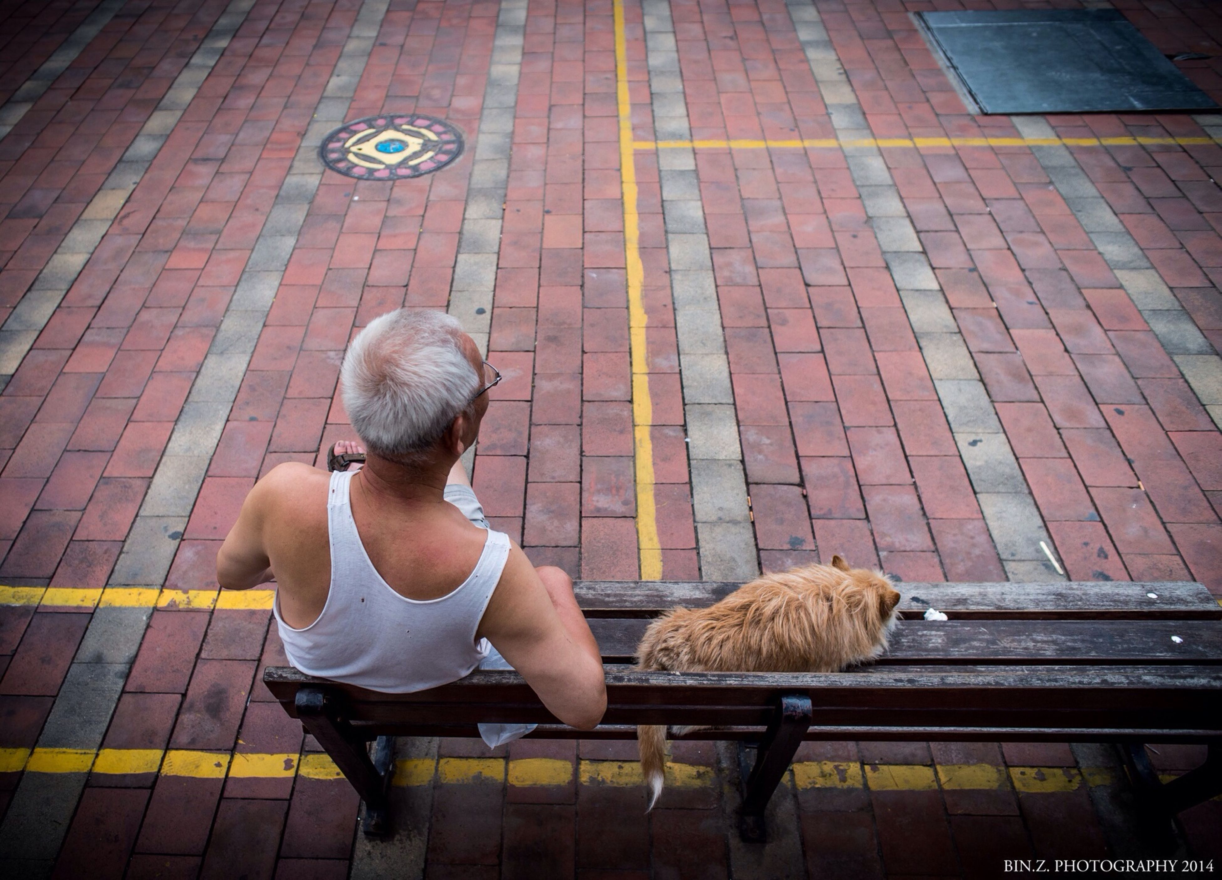 sitting, animal themes, relaxation, one animal, full length, rear view, casual clothing, lifestyles, bench, pets, leisure activity, domestic animals, wood - material, bird, high angle view, mammal, resting, day