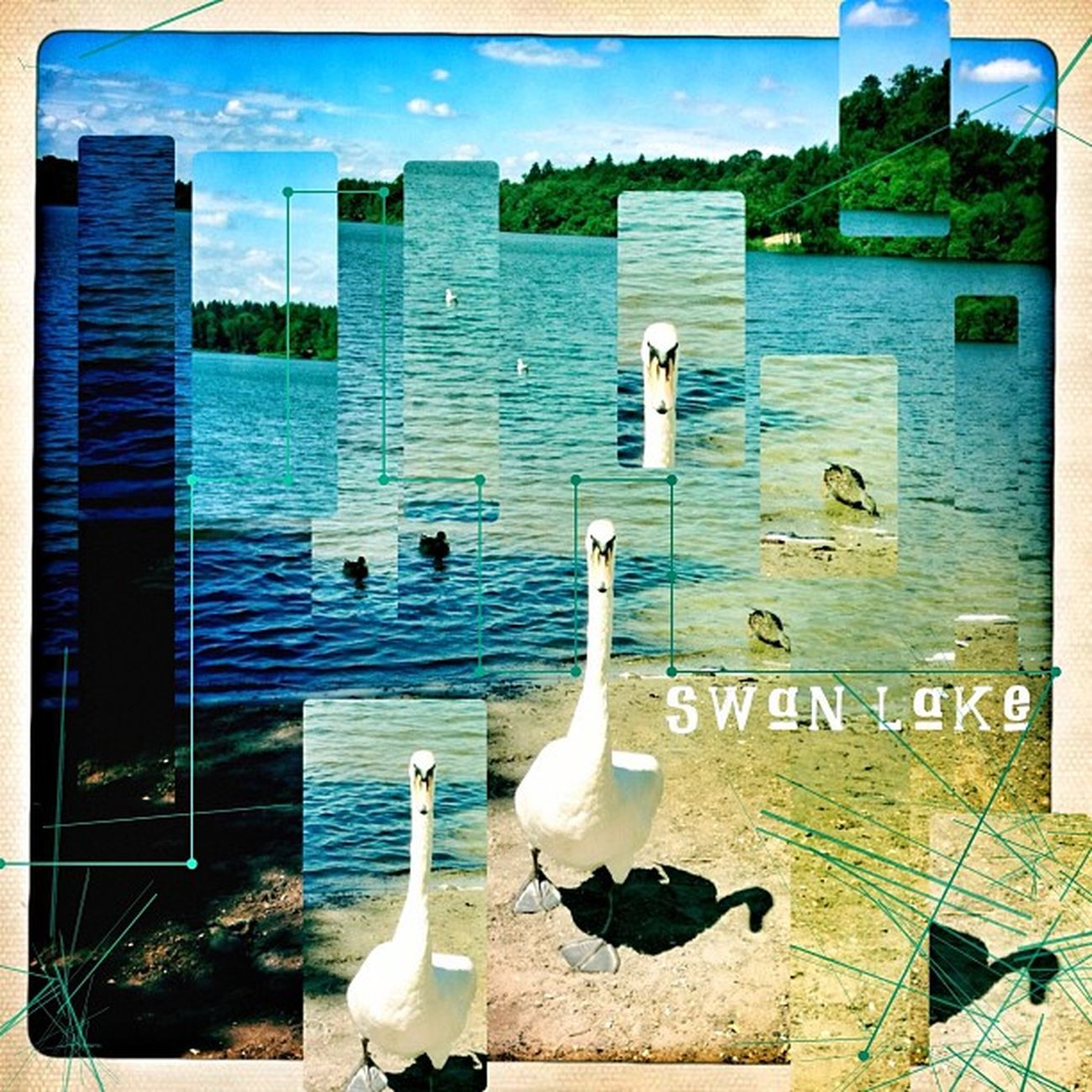 Sean Lake.#Snapseed #ampt_community #ampt #igers #tryingout #tinyshutter #tinyshuttercontest #swan #lake #surrey #verginiawater #instascoop # Mobfiction Lake Swan AMPt Surrey Snapseed AMPt_community Igers Tinyshutter Tryingout Instascoop Tinyshuttercontest Verginiawater