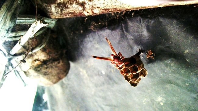 Insect Photography Makeing Home Sweet Home For Protect And Save Our Planet Collection .... Mobile Photography ...