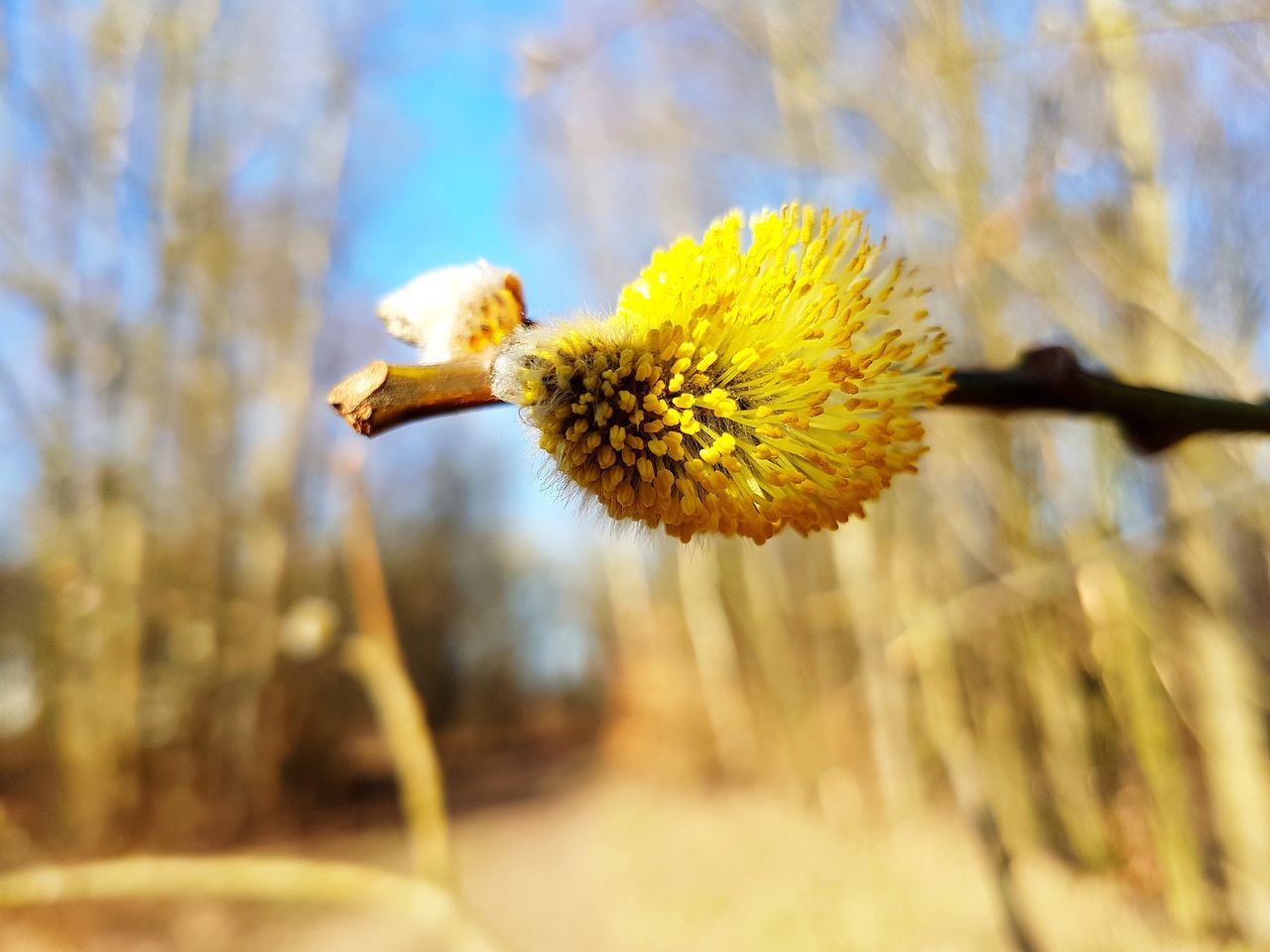 Nature No People Beauty In Nature Plant Yellow Growth Outdoors Day Wilted Plant Flower Head Spring Sunny