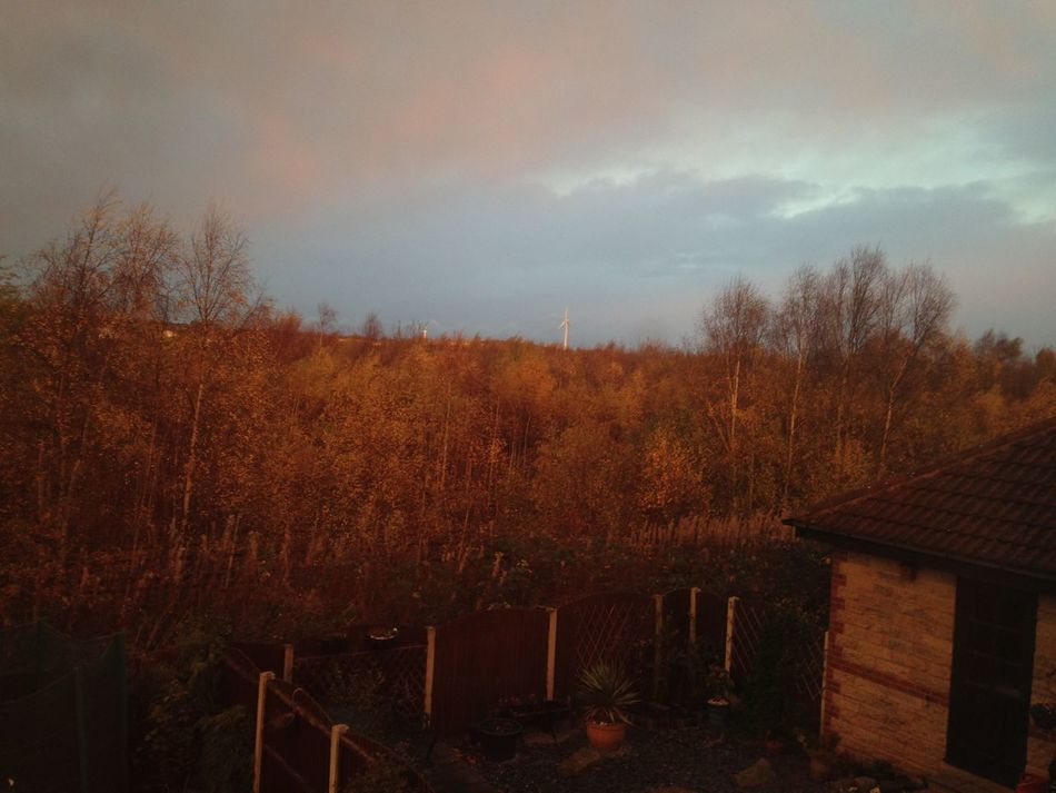 No Filter Autumn Autumn Colors Trees Train Track Out Of The Window My Back Garden Back Garden