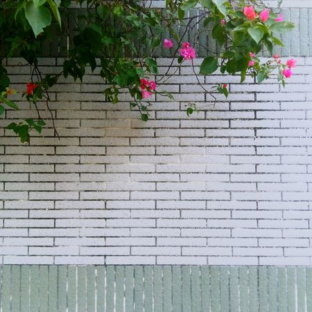 Flower Growth Nature Plant Close-up Wall Green Mood Feeling - Lok Wah Hong Kong