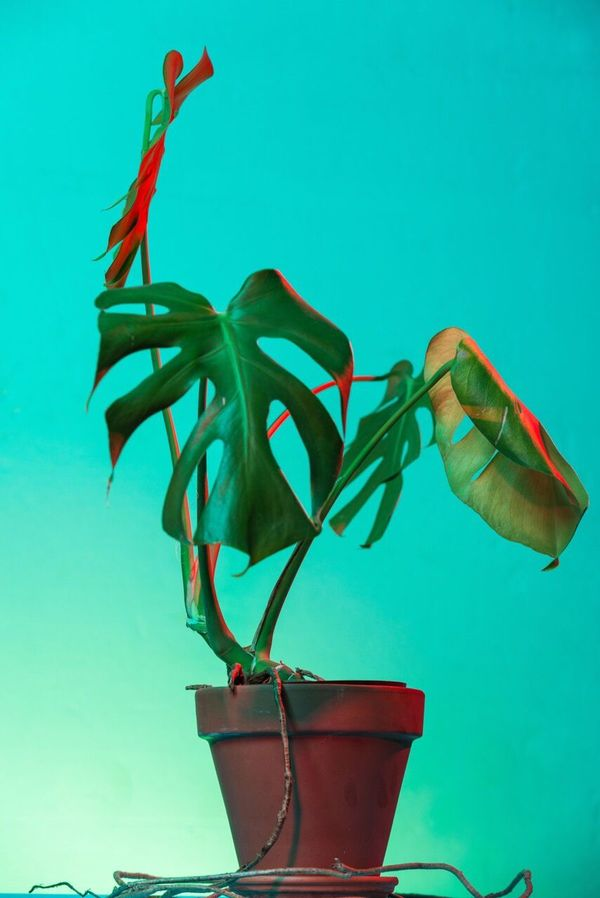 Deliciousmonster Plant Neon Lifestyle Pink Green Red Plant Lightpainting