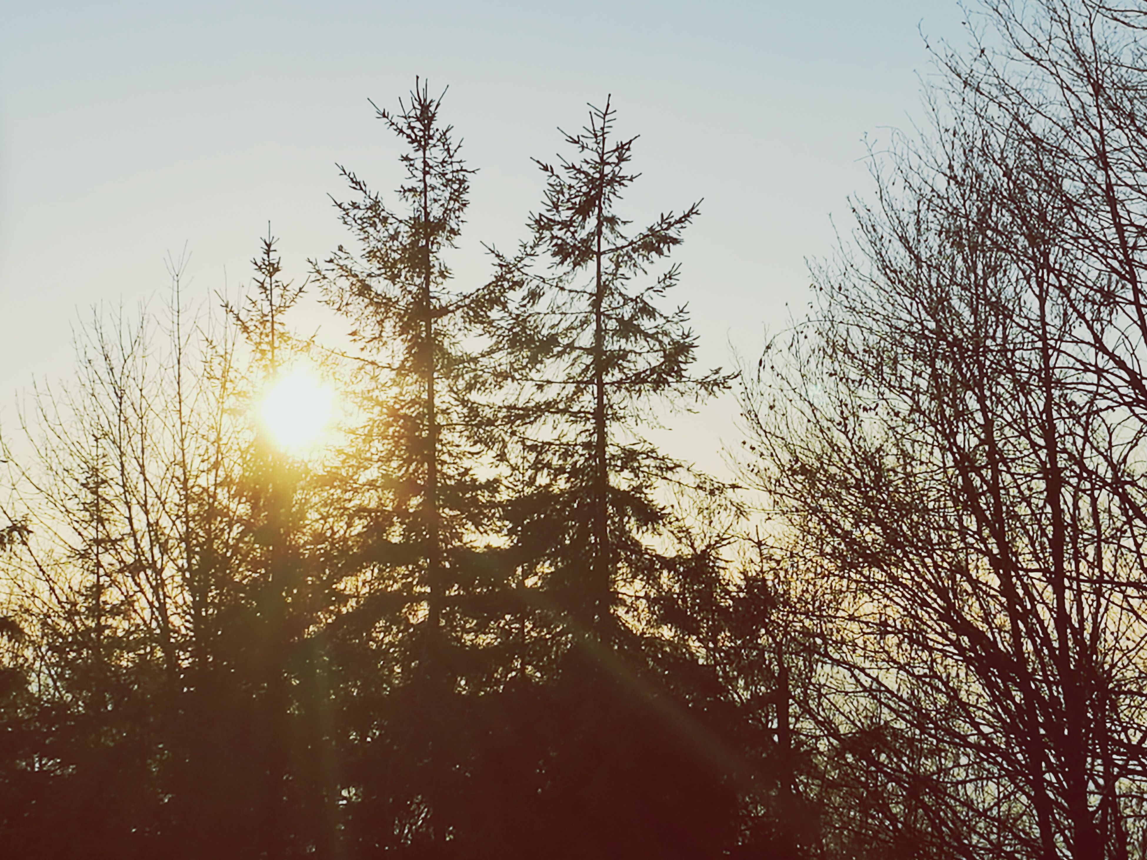 sunset, nature, sun, beauty in nature, sunlight, growth, no people, tree, low angle view, tranquility, sky, outdoors, scenics, tranquil scene, close-up, day