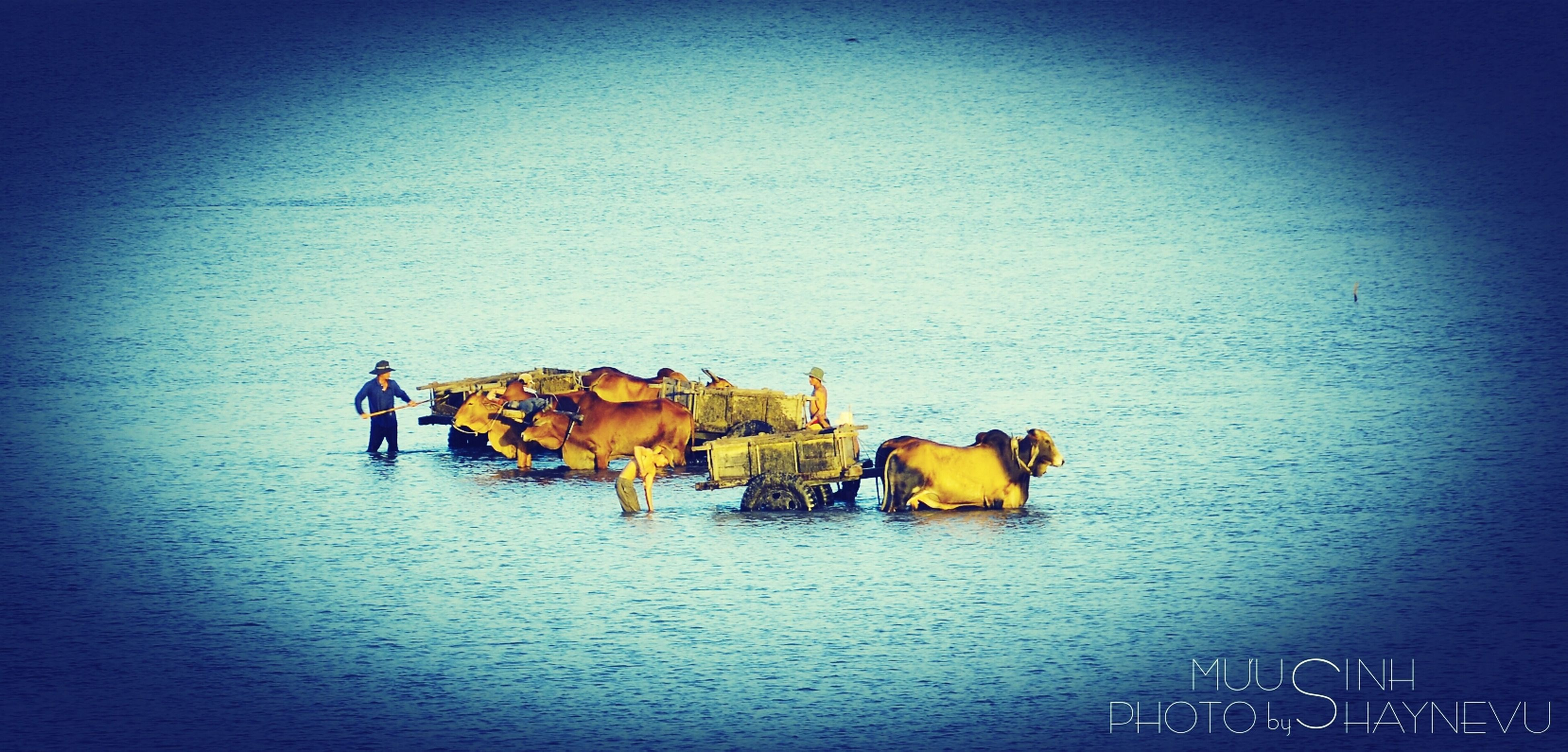 blue, water, waterfront, nautical vessel, copy space, boat, yellow, transportation, multi colored, day, outdoors, no people, clear sky, sea, mode of transport, nature, moored, built structure, rippled, auto post production filter