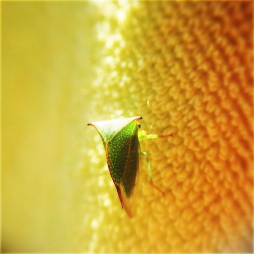 One Animal Animal Themes Insect Green Bug Towel Yellow Towel Macro