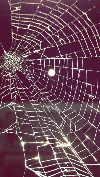 Supermoon 2014 Spider Silk Croatia ♡ Dubrovnik