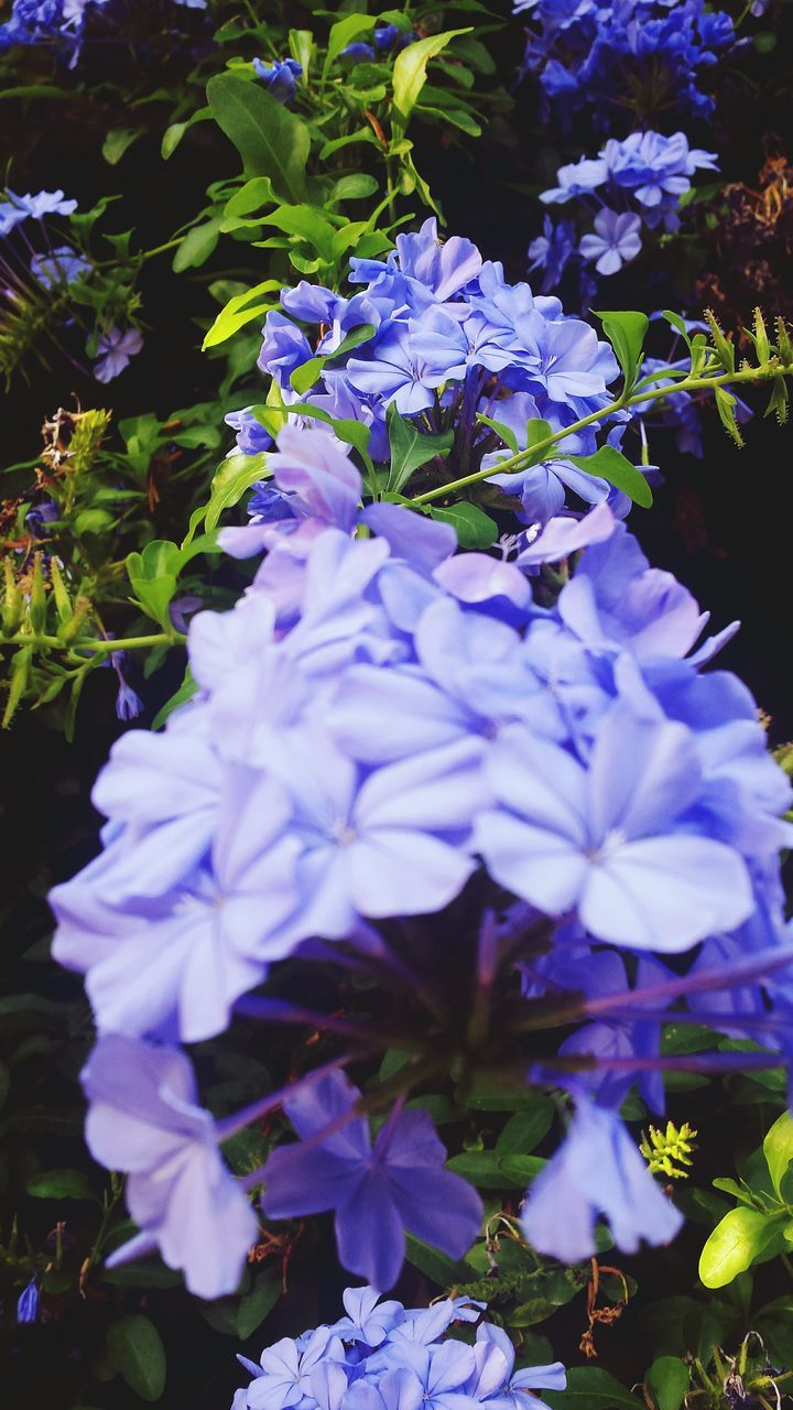 flower, beauty in nature, purple, nature, fragility, petal, freshness, growth, outdoors, plant, flower head, no people, day, blue, blooming, close-up, petunia