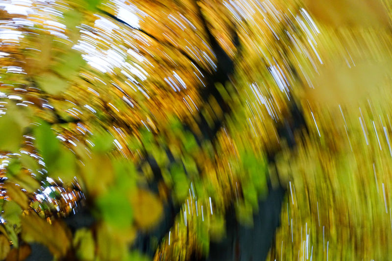 Autumn series... Autumn Autumn Colors Autumn Leaves Background Backgrounds Blurred Motion Close-up Concentric Day Fragility Freshness Full Frame Nature No People Outdoors Season  The Week On EyeEm
