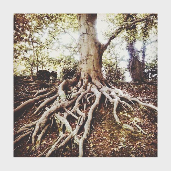 Hanging Out Enjoying Life Wood Trees TreePorn Nature EyeEm Nature Lover Popular Photos Taking Photos Relaxing