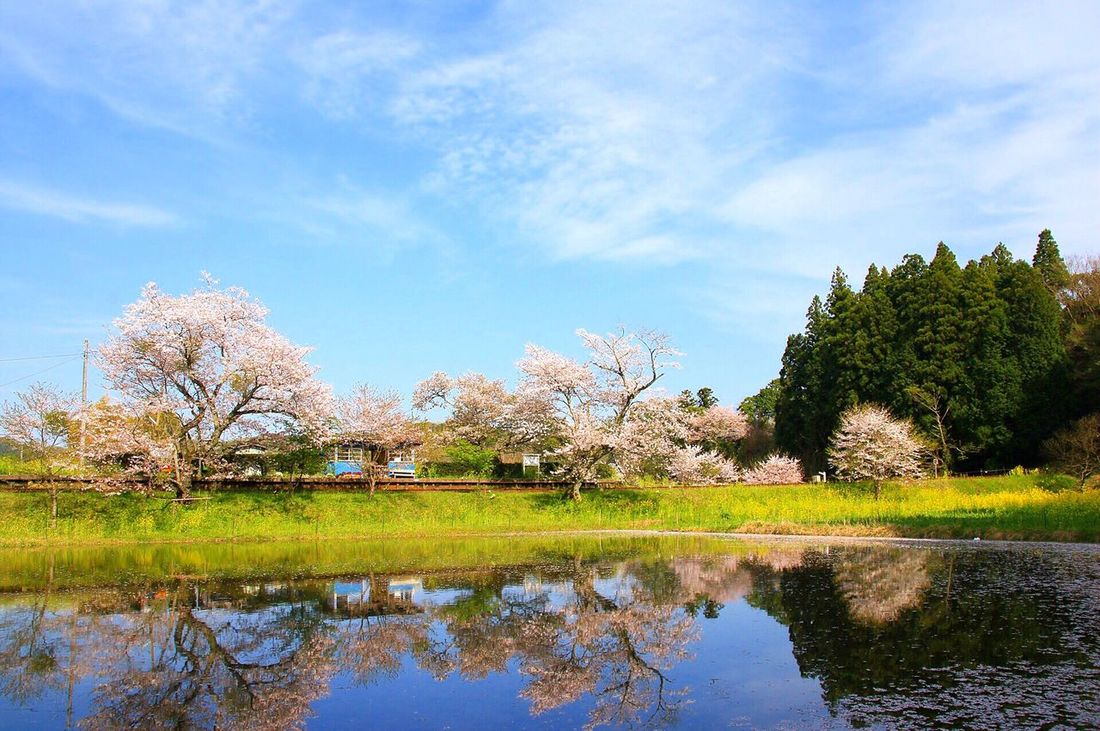 Tree Sky Beauty In Nature Nature Reflection Cloud - Sky Scenics Tranquil Scene Tranquility Day Outdoors No People Lake Water Growth Landscape Building Exterior Architecture 飯給駅