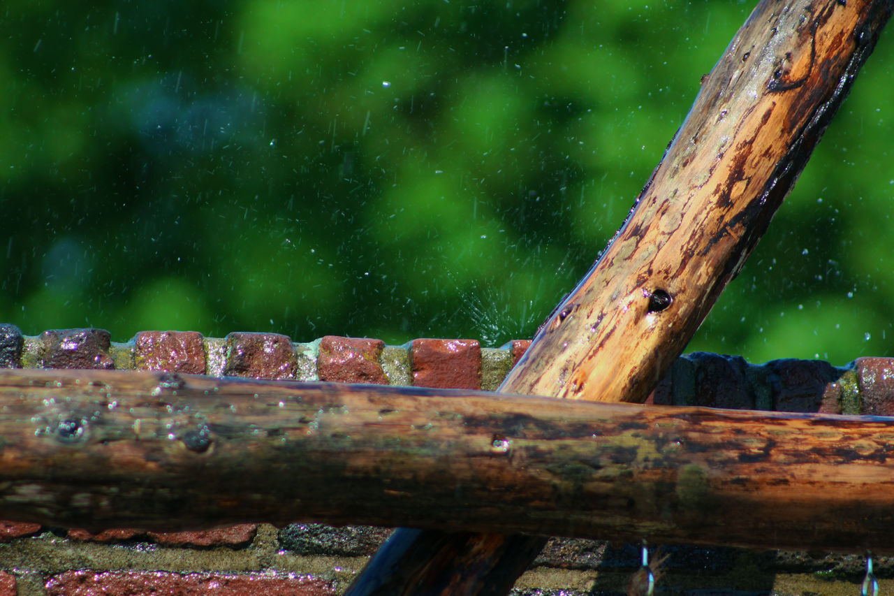 Animal Themes Close-up Day Dripping Drops Drops Of Water Field Focus On Foreground Forest Moist Moisture Nature No People Outdoors Rain Slippery Summer Sunny Tree Tree Trunk Wall Water Water Drops Wet Wood - Material