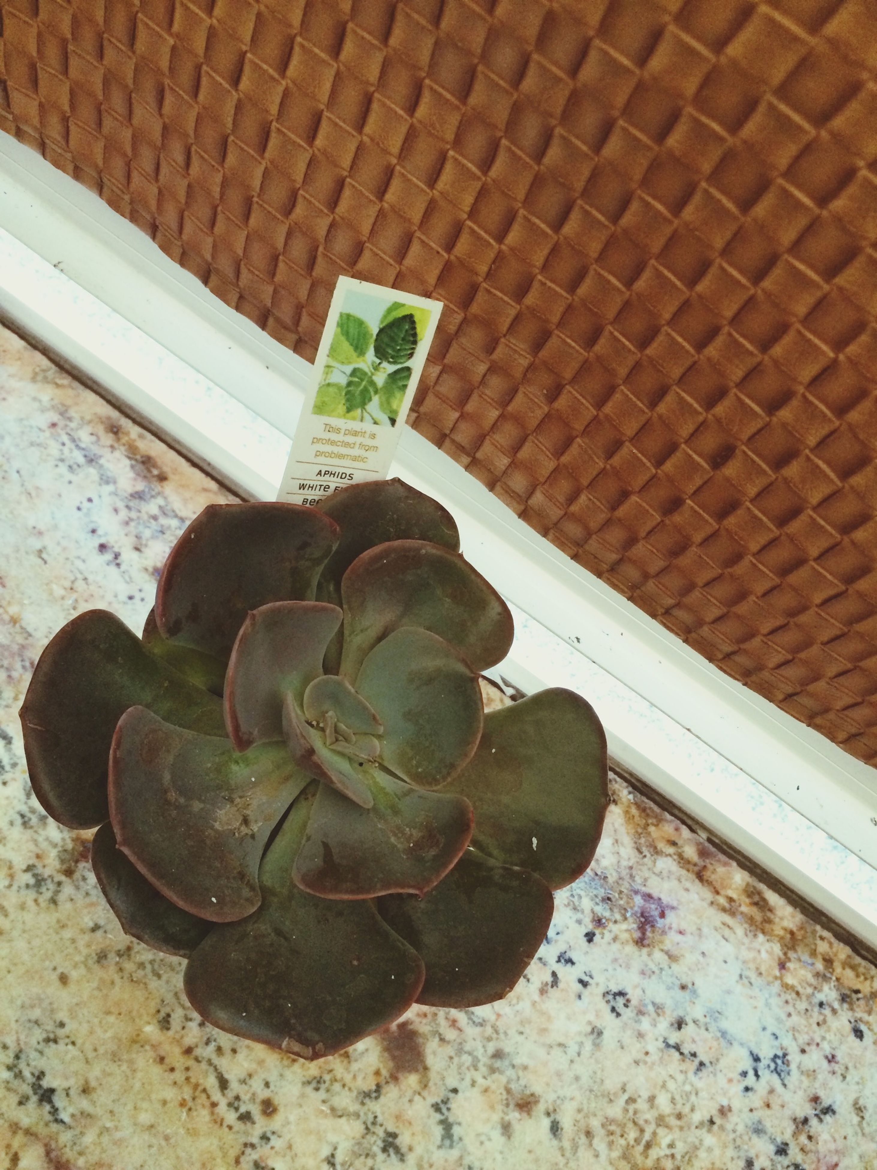 high angle view, leaf, plant, close-up, potted plant, growth, wall - building feature, sunlight, day, no people, nature, outdoors, still life, flower, cactus, fragility, metal, shadow, freshness