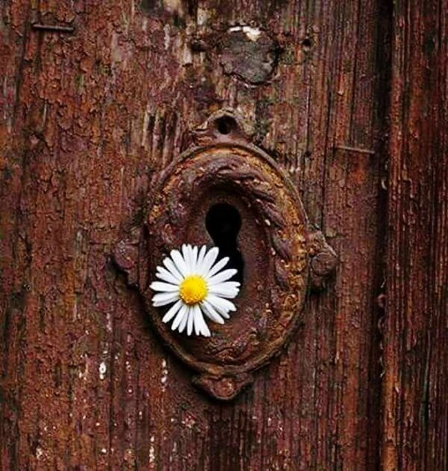 Doors Flower Wood - Material Textured  Close-up Fragility Freshness Wooden Wood Tree Trunk Single Flower Petal Full Frame Weathered Flower Head No People