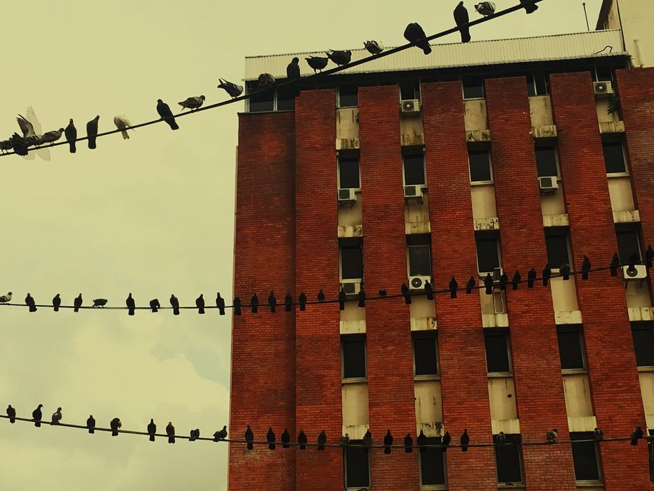 Pigeons Flat Building Exterior Johor Bahru Electrical Cables Queueing No People Sky Red Brick Wall